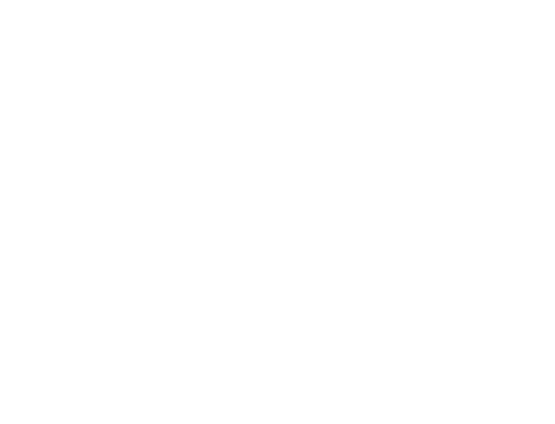 Fly Of Swallow